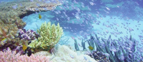 BioD Responds to New Conservation Strategy for the Great Barrier Reef